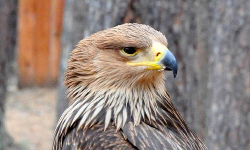 питомник хищных птиц Холзан